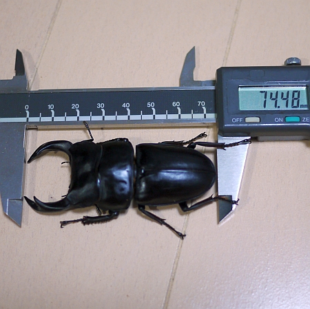 P1180326